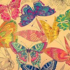 Butterflies Tropical Wonderland