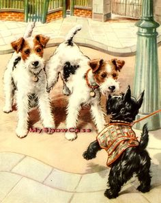SCOTTISH & WIRE HAIR FOX TERRIER SCOTTIE DOG Old Print