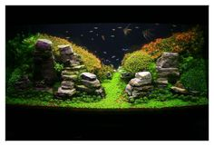 January 2011 Aquascape of the Month: Peruvian Nights   AquaScaping ...