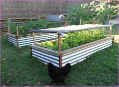 ooh! the wire around the sides & top are a great idea for keeping out the birds (incl chickens)! then our girls can have the run of the yard without us worrying about the vegies.  this also provides a good support for shade cloth (needed regularly here in the high desert of Santa Fe!)