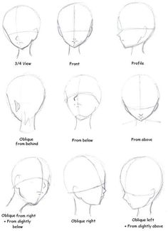 drawing the head. (3/4 view, front, profile, oblique from behind, from below, from above, oblique from right and slightly below, oblique right, oblique left from slightly above.)