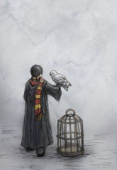 Harry Potter and Hedwig by ejbeachy. I suspect this is shortly after Harry arrived at Hogwarts for the first time. Harry Potter Fan Art, Harry Potter World, Mundo Harry Potter, Harry Potter Drawings, Harry Potter Universal, Harry Potter Fandom, Harry Potter Sketch, Hedwig Harry Potter, James Potter