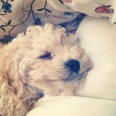Billy | sweet dreams