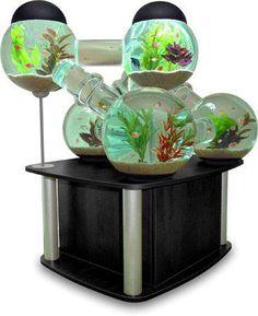 Cool Fish tank (Silverfish Aquarium by Octopus Studios Modern Fish Tank, Unique Fish Tanks, Cool Fish Tanks, Amazing Fish Tanks, Aquarium Design, Home Aquarium, Aquarium Fish, Fish Aquariums, Tanked Aquariums