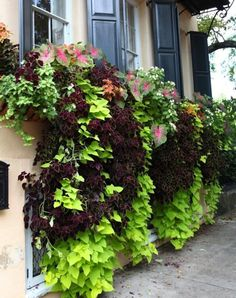 My next project is lining the top of my front porch with window boxes and planting coleus, sweet potato vines and caladiums to get this exact look!