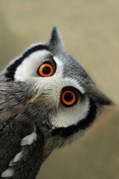 That awkward moment where you know you should look away, but you just can't! Cute owl