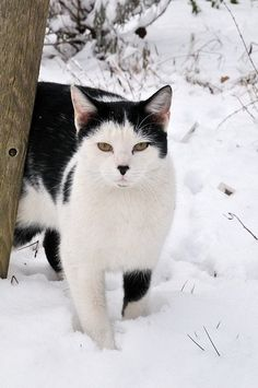 Helping Homeless Cats Through the Winter | petMD