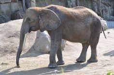 Zoo - Vienna Vienna, My Photos, Elephant, Animals, Animales, Animaux, Elephants, Animal, Animais