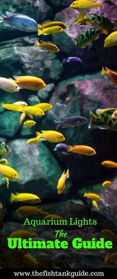 Shrimp Safe Sale Price Vegetarian Capsules Osmocote Root Tabs For Planted Aquariums