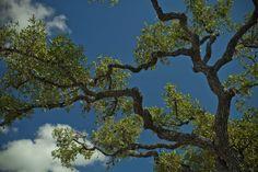 Bending Branch Winery (Comfort, TX)