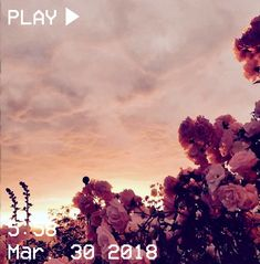 Flowers aesthetic single 46 Ideas for 2019 Sky Aesthetic, Flower Aesthetic, Aesthetic Grunge, Aesthetic Photo, Aesthetic Pictures, Aesthetic Yellow, Aesthetic Backgrounds, Aesthetic Iphone Wallpaper, Aesthetic Wallpapers