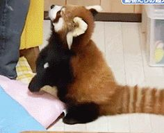 I would love a red panda, please.