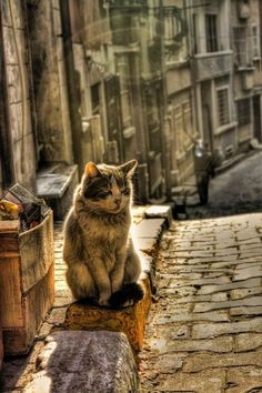 stunning cat against a stunning backdrop / street photography / cat photography / street photos / street pictures / cat photos / cat pictures I Love Cats, Crazy Cats, Cool Cats, Beautiful Cats, Animals Beautiful, Gato Calico, Cats Diy, Alley Cat, Cat Photography