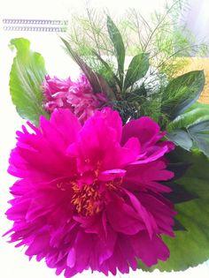 Kesä ja kukat! Plants, Plant, Planets