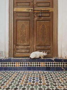 #morocco #cat #bahia #palace   kyul   VSCO Grid