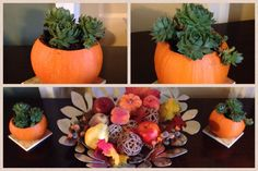 Succulents in baby pumpkins centerpiece.