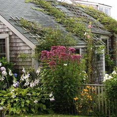 Photo: Nancy Andrews | thisoldhouse.com | from Cottage Gardens