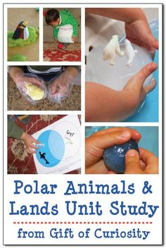 Polar animals and lands unit study for preK through 3rd grade. Includes activities as well as free printables for teaching kids about Arctic and Antarctic animals. LOTS of great resources and ideas here! || Gift of Curiosity