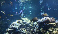Spending the day at the aquarium in Virginia Beach. #VaBeach