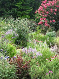 How do you use crape myrtles? - Cottage Garden Forum - GardenWeb