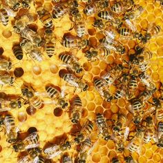 Harvesting Honey, Bee Friendly Plants, Bee Swarm, I Love Bees, Backyard Beekeeping, Bees And Wasps, Bee Happy, Save The Bees, Bees Knees