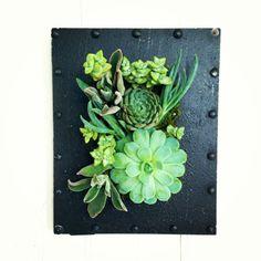 Vertical Succulent Planter Arrangement by VerticalFlora on Etsy