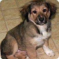 Adopt A Pet :: Rumor - Burbank, OH