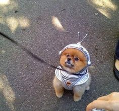 In Dog Space Suit (page 3) - Pics about space