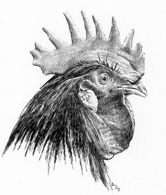 The Farm Animals Pencil Drawing 28 - Art Bird Drawings, Animal Drawings, Pencil Drawings, Chicken Drawing, Chicken Art, Rooster Painting, Rooster Art, Animal Sketches, Drawing Sketches