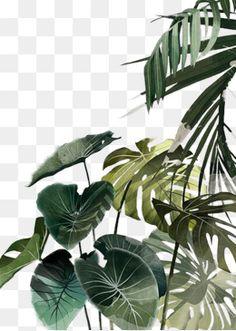 Watercolor leaves, watercolor clipart, design, creative design png image and . Leaf Clipart, Clipart Images, Clipart Design, Architecture Graphics, Watercolor Leaves, Tropical Art, Plant Illustration, Grafik Design, Clip Art
