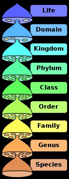 Scientists classify living things into groups. At the top of the classification system (shown to the left) are three domains. All living things...