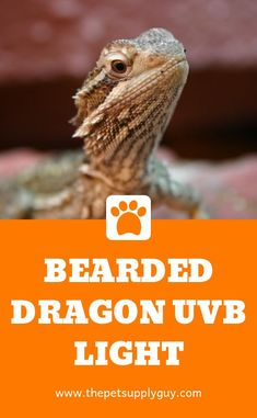 Getting the best UVB light for a bearded dragon is one of the most important decisions you will make as a bearded dragon owner. If a bearded dragon isn't provided with enough UVB light they can suffer. Bearded Dragon Heat Lamp, Bearded Dragon Lighting, Bearded Dragon Food, Bearded Dragon Terrarium, Bearded Dragon Habitat, Reptile Supplies, Pet Supplies, Reptiles, Amigurumi