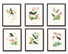 """Hummingbird Print Set No.1 Set of 6 Giclee Vintage Bird Prints Home Decor Wall Art - Unframed. These beautiful hummingbird illustrations have been adapted from an antique natural history text. The images have been restored, enhanced and added to a light neutral background. • Free Shipping • Money Back Guarantee • Sizes Available: 5x7, 8x10, 11x14 • Trimmed to size for easy framing. • Sized to fit """"off the shelf"""" standard retail frames & mats. • Printed on Professional Archival Paper using..."""