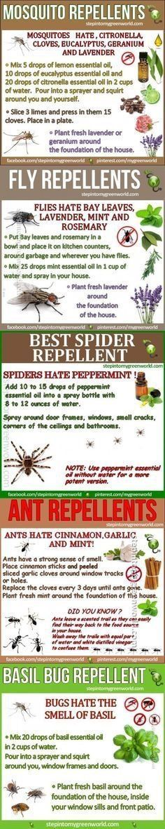 How To Make Natural Bug Repellants (Mosquito, Ant, Fly, Spider)