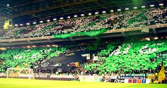 #CurvaSul #sporting #SportingClubePortugal #sportingfans