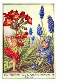 Polyanthus & Grape Hyacinth Flower Fairy Print c.1950 Fairies by Cicely Mary Barker