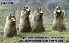 """Luke 10:8 """"If you enter a town and it welcomes you, eat whatever is set before you."""
