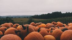 Image result for autumn tumblr