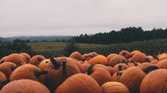 Resultado de imagen de autumn halloween aesthetic