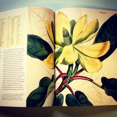 A sneak peek into the beautiful 'Flora Illustrata', documenting archives from the New York Botanical Gardens.