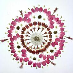 Nevertheless, Spring persisted. :) #sundaymorningmandala #thecreativecontemplative