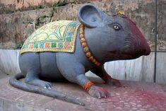 rat temple india - Google Search