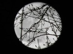 "Moon Behind the Trees by Emily Jeremy (UK), aged 12.  This Highly Commended picture is a little gem. So simple, but so effective, as it links heaven and Earth. Mona Evans, ""Astronomy Photographer of the Year 2014"" http://www.bellaonline.com/articles/art184169.asp"