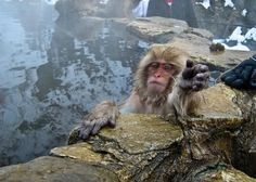 """Snow Monkey 