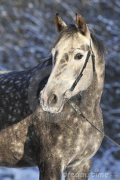 Grey horse in winter by Viktoria Makarova, via Dreamstime