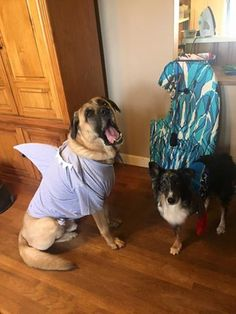Halloween costume fun! Enter the #Tripawds Howloween Photo Contest at http://tripawds.com/forums/special-events-and-scheduled-maintenance/2015-tripawds-howloween-contest/