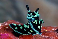 Sea slug!!! Cute face!!!