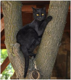 Black cat Black cats are beautiful. I love doing Black Cat Tuesday. Cats are not evil and they are lucky. They are cats like any other cat. I am happy to see so many people following this board. Thanks and have a good day or evening. Wherever you live. Neonwoman