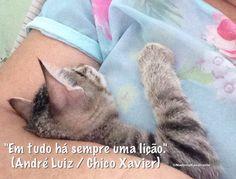 """""""Em tudo há sempre uma lição."""" André Luiz / Chico Xavier)"""