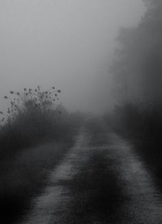 """""""And it is strange that absence can feel like presence."""" ~ Ally Condie, Crossed / Image: River Road by Monica Dionne ---- Quote put on by Ron Herzog Dark Photography, Black And White Photography, Gothic Aesthetic, Aesthetic Fashion, Dark Forest, Dark Places, Dark Fantasy, Dark Art, Aesthetic Wallpapers"""
